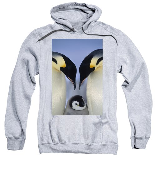 Emperor Penguin Family Sweatshirt