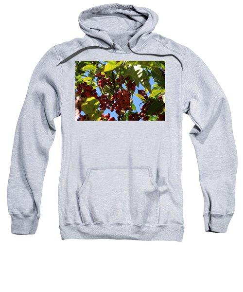 Ethiopian Coffee Beans Sweatshirt