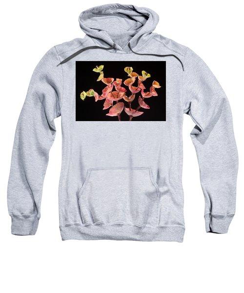 Euphorbia Sweatshirt