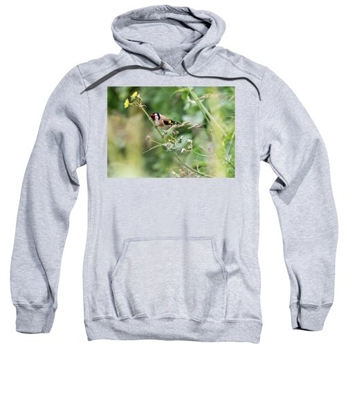 European Goldfinch Perched On Flower Stem B Sweatshirt