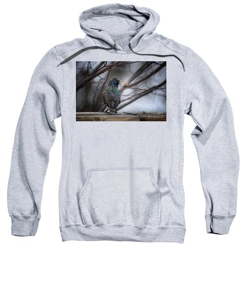 European Starling In Non Breeding Colors Sweatshirt