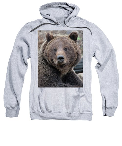 Face Of The Grizzly Sweatshirt