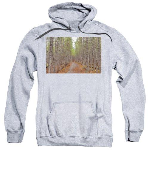 Fall Aspen Trail  Sweatshirt