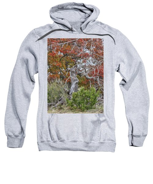 Fall Colors Once Again Sweatshirt