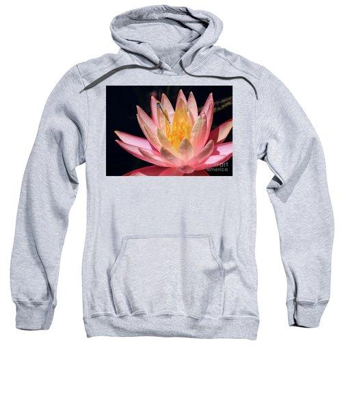 Familiar Bluet Damselfly And Lotus 2 Sweatshirt