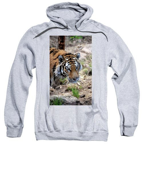 Feline Focus Sweatshirt