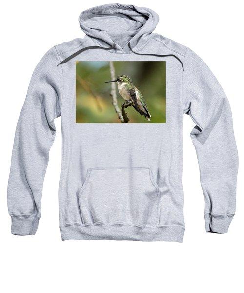 Female Ruby-throated Hummingbird On Branch Sweatshirt