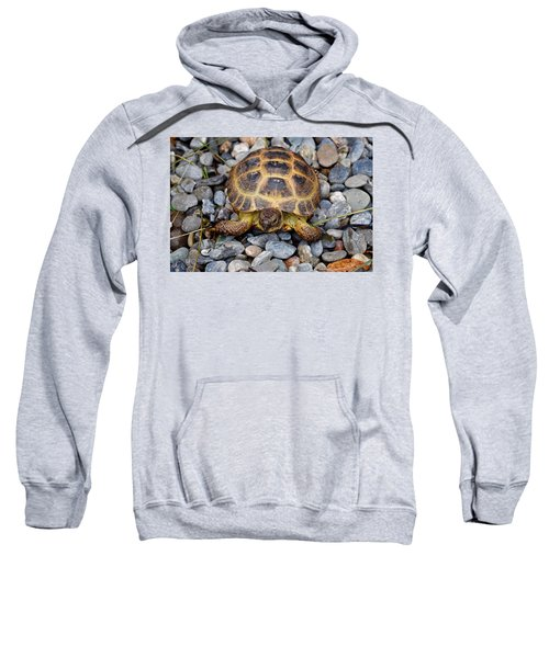 Female Russian Tortoise Sweatshirt