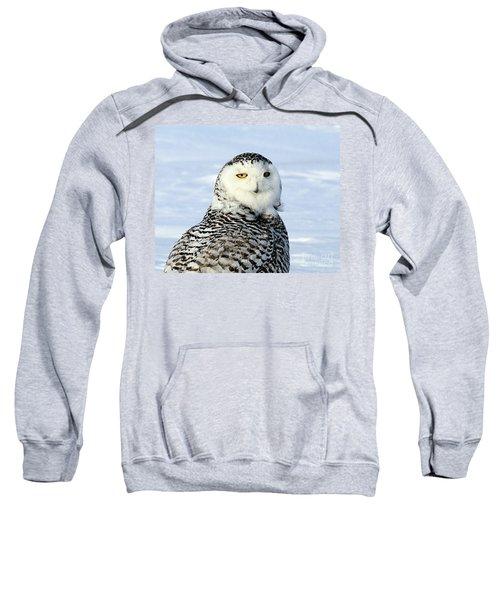 Female Snowy Owl Sweatshirt