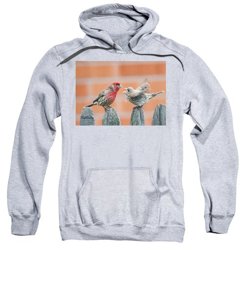 Feuding Finches Sweatshirt