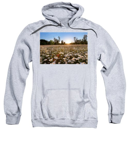Field Of Daisies Sweatshirt