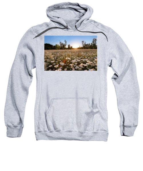 Field Of Daisies Sweatshirt