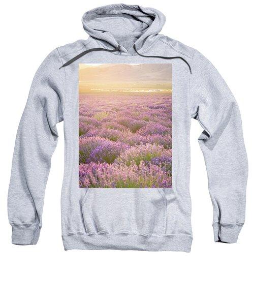 Fields Of Lavender Sweatshirt