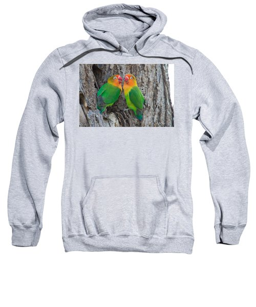 Fischers Lovebird Agapornis Fischeri Sweatshirt by Panoramic Images