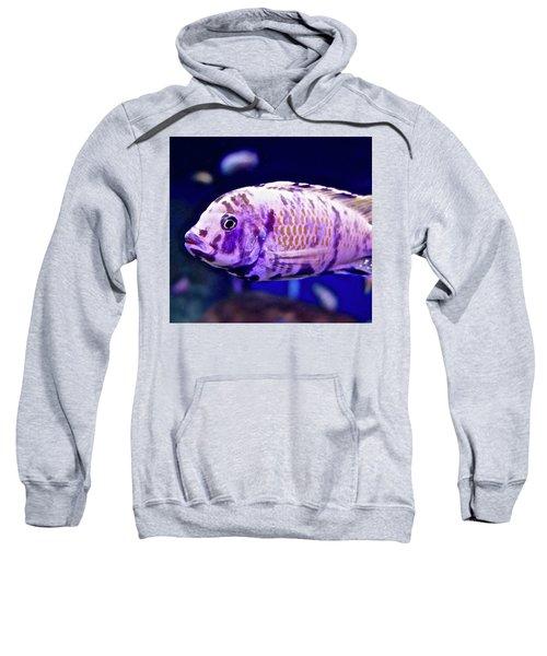 Calico Goldfish Sweatshirt