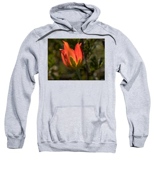 Flaming Beauyy Sweatshirt