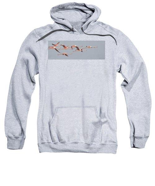 Flamingos In Flight Sweatshirt