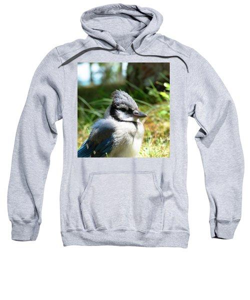 Fledgling Sweatshirt