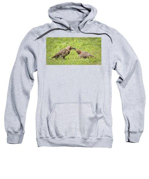Flicker Feeding Sweatshirt