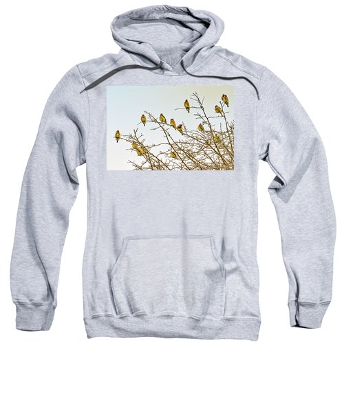 Flock Of Cedar Waxwings  Sweatshirt