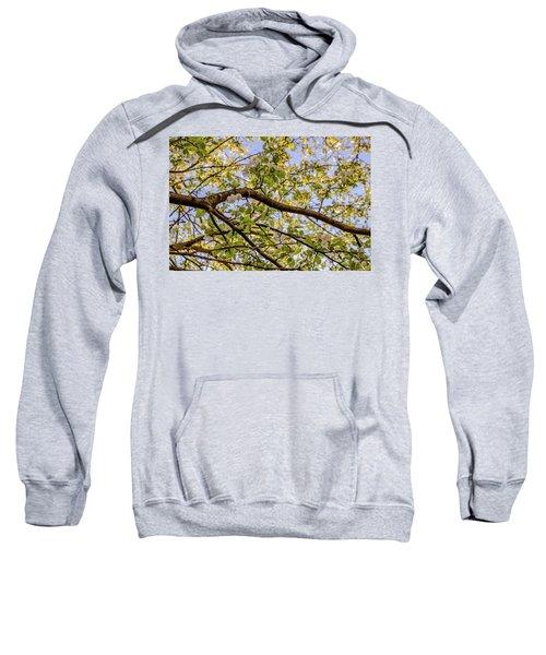 Flowering Crab Apple Sweatshirt