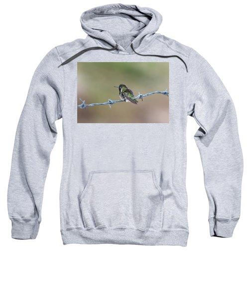 Fluffy Hummingbird Sweatshirt