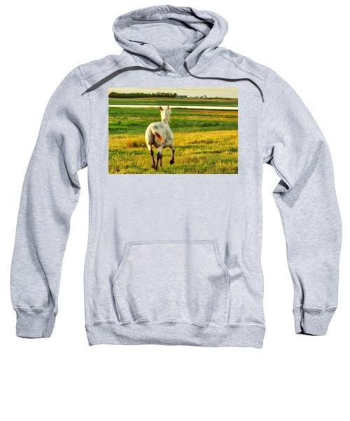 Follow My Lead Sweatshirt