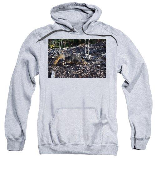 Squirrel Pprh Woodland Park Co Sweatshirt