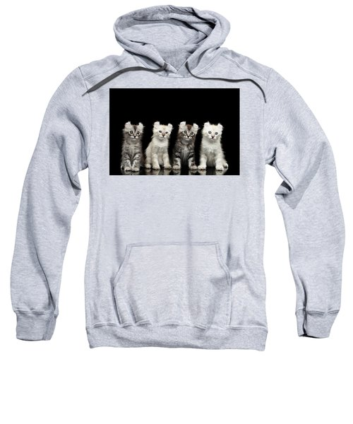 Four American Curl Kittens With Twisted Ears Isolated Black Background Sweatshirt