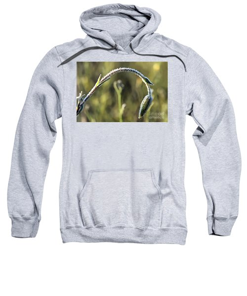 Frost On Flower Sweatshirt