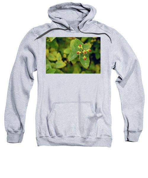 Fall Berry Sweatshirt