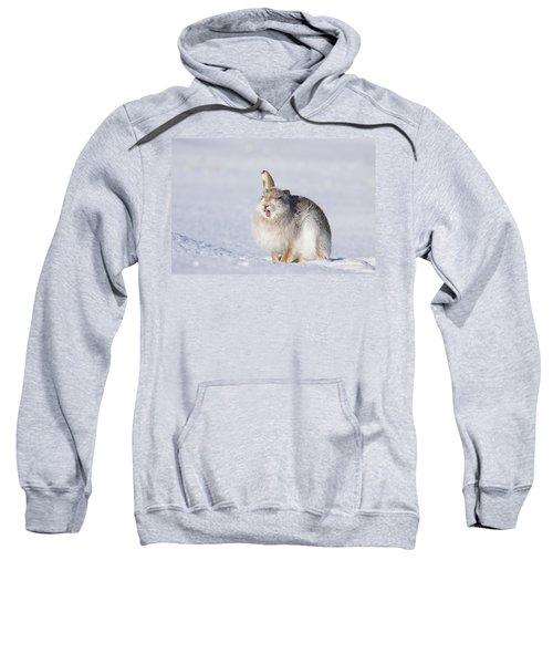 Funny Face - Mountain Hare - Scottish Highlands  #13 Sweatshirt