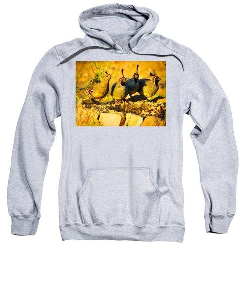Gambel's Quail Foursome Sweatshirt