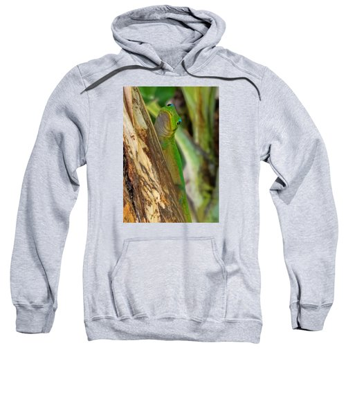 Gecko Up Close Sweatshirt