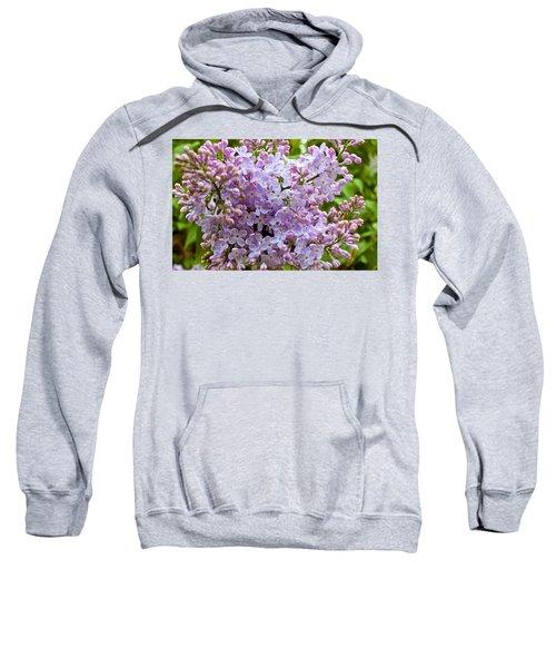 Gentle Purples Sweatshirt
