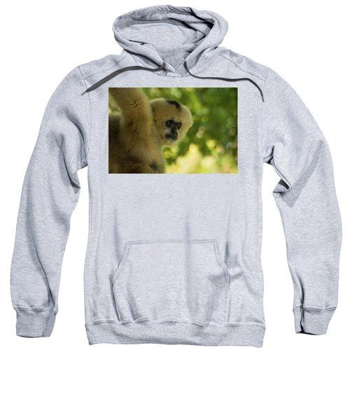 Gibbon Portrait Sweatshirt