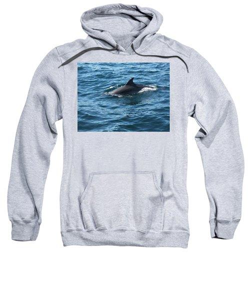 Gibraltar Dolphin  Sweatshirt