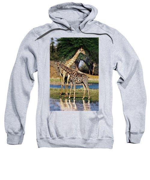Giraffe Mother And Calf Sweatshirt
