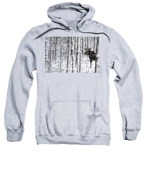 Glimpse Of Bull Moose Sweatshirt