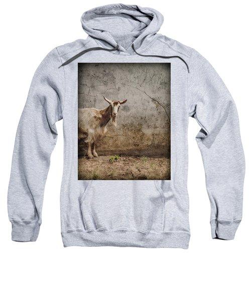 London, England - Goat Sweatshirt