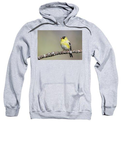 Gold Finch Sweatshirt
