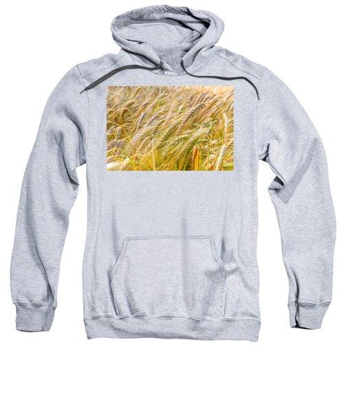 Golden Barley. Sweatshirt