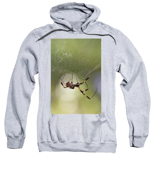 Golden-silk Spider Sweatshirt