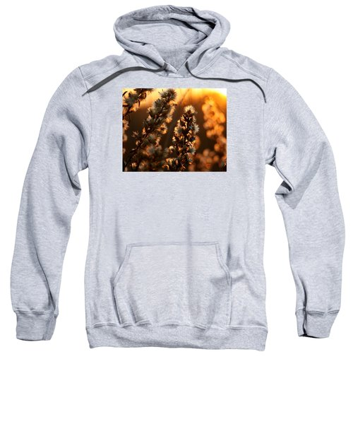 Goldenrod At Sunset Sweatshirt