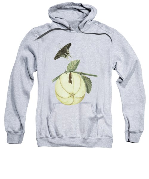 Grapefruit With Leaves Caterpillar And Butterfly By Cornelis Markee 1763 Sweatshirt