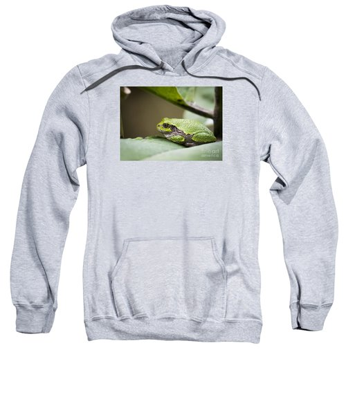 Sweatshirt featuring the photograph Gray Tree Frog - North American Tree Frog by Ricky L Jones