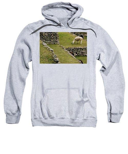 Grazing In Machu Picchu Sweatshirt