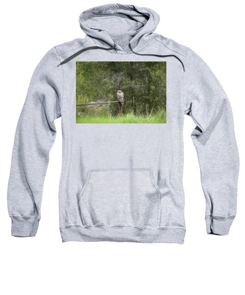 Greathornedowl2 Sweatshirt