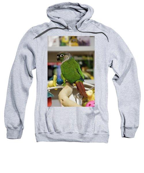 Green Cheek Conure Sweatshirt