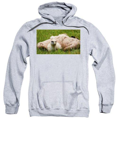 Griffon Vulture Sweatshirt